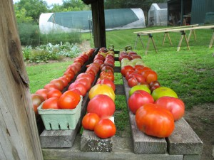 Heirloom tomatoes ready to go to the roadside stand.