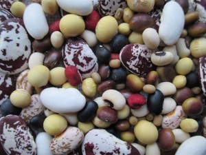 A diverse sample of dry beans