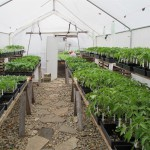 greenhouse plants 1000 by 750