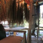 Hanging rice in shed
